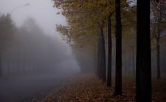 NEBIN (albi_tai) Tags: street autumn fall leaves fog foglie alberi strada olympus otoo nebbia autunno rosso varese ohhh foschia bustoarsizio 21052 21100 olympussp510uz sp510uz lifebeautiful albitai nebin