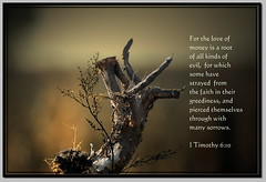 For The Love of Money Is A Root of All Kinds of Evil... (honey 77) Tags: money nature god jesus evil lord inspirational root greedy scriptures treeroot sorrows bibleverse inspiks|inspirationalpictures
