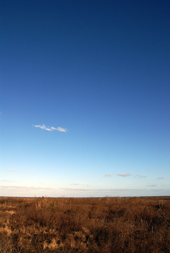 Lots of sky at Paynes Prairie.