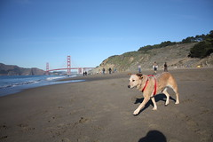 Sophie with GG Bridge in Background (sanfran_michael) Tags: sanfrancisco bakerbeach