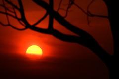 The Naked Tree I (Firdaus Mahadi) Tags: sunset sun tree silhouette malaysia kajang senja matahari pokok semenyih petang nakedtree nikkor70300vr bandarteknologikajang firdausmahadi firdaus
