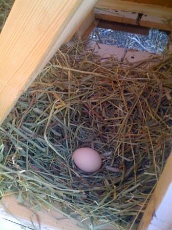 the first egg 2