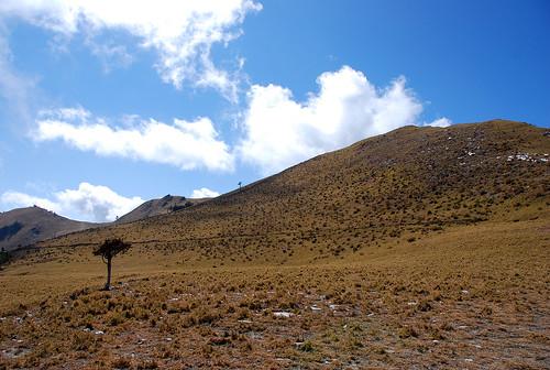 藍天白雲草原小樹