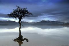 """That Tree"" (Nicolas Valentin) Tags: mountain snow nature water print geotagged freedom scotland three still bravo scenery searchthebest arbre lochlomond hum aplusphoto treeswap infinestyle youvsthebest lightiq thepinnaclehof thepinnacleblog"