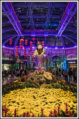 Happy Chinese New Year (vw4ross) Tags: vegas flowers blue colors yellow statue colorful purple lasvegas chinese vivid chinesenewyear newyear bellagio botanicalgardens d90 yearoftheox nikkor18200mmvr nikond90