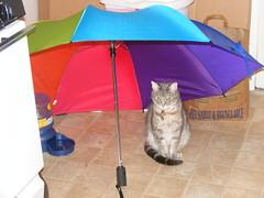Xena under umbrella