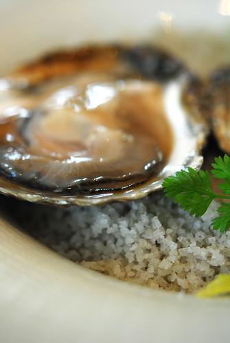 Oyster - DSC_3691