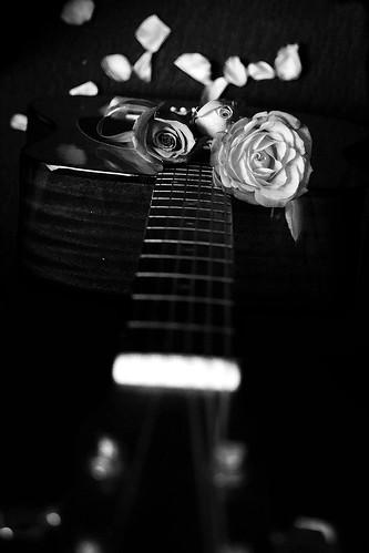 Roses 27