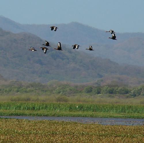 Palo Verde, Estrellas y Aves, Feb 2009