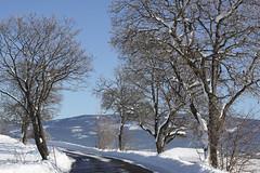 Vårlys (fotomormor) Tags: himmel vei snø greiner trær hvit stammer a3b pfogold pfosilver