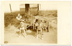 Dogcarting In Style (c.1925) (postaletrice) Tags: old chien canada dogs wearing up hat sepia vintage de glasses photo funny comic  antique top postcard pipe smoking antigua chapeau carro northamerica perros gafas postal sombrero amusing cart harness doggies dressed copa con pipa postale cartolina carte canad tack chiens ancienne carrito disguised tarjeta fumando divertida hautdeforme graciosa cpa northamerican disfrazados dguiss dogcart harnessed rppc attelage