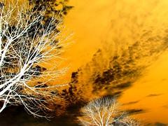 Trees Under The Sky (Mohammad Alsaihati) Tags: trees sky cloud tree art yellow clouds canon arts sx1 invert        saihat malsaihati