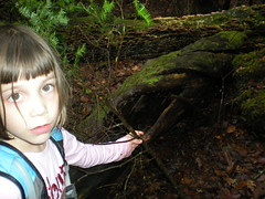 8-Sophie Finds a Hollow Log