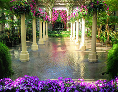 Enchanted Spring | Longwood Gardens (*Arielle*) Tags: flowers trees music fountain pool river garden spring vines pennsylvania columns mystical fountains magical longwood enchanted arielle kennettsquare hbw ariellekristina
