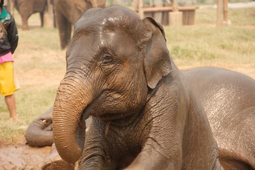 Elephant Nature Park-128