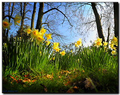 SPRING SUNSHINE (mickeydud) Tags: flowers friends england flower nature closeup landscape countryside kent village blossoms british naturalworld shiningstar springsummer villagelife naturesfinest beautifulshot fantasticflower mywinners d700 gobalvillage 15challengeswinner heartsaward naturewatcher worldwidelandscapes excellentsflowers arealgem highqualityimage natureselegantshots spiritofphotography colourvisions gemsofnature thechallengefactory thechallengefactorywinner photographersgonewild vanagram 100commentgroup vanagrammofonaward doubledragonawards naturescreations mickeydud freedomhawkaward visionquality storybookwinner