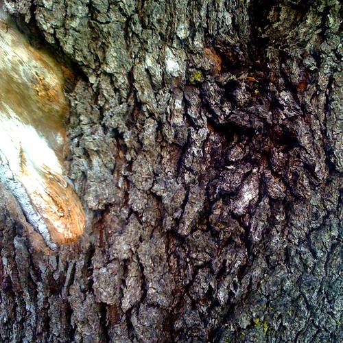 Tree Bark (iPPPD #2)