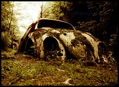 Mother natures beloved child returns (essichgurgn) Tags: auto abandoned car vw volkswagen de automobile beetle voiture coche ferdinand porsche carro bern scrapyard wreck macchina wolfsburg cimetiere kfer oto automvil karu fusca aircooled motorcar wagen gmnd chatillon cotxe  kocsi vocho    kdf  samochd  maggiolino autofriedhof vehculo otomobil   automobiel  bublan  vettura  grbetal  bl avtomobil makin   karru mba          awto oyto