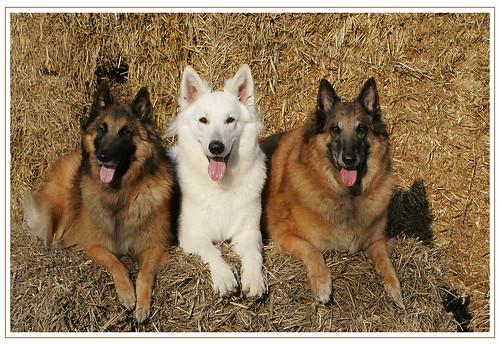 Meine drei Jungs