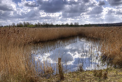 England, Northamptonshire: Pool of Reflections (Tim Blessed) Tags: uk sky nature water clouds reflections reeds landscapes countryside scenery wetlands ponds singlerawtonemapped