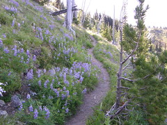 Flowers on Crystal Peak trail.
