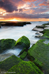 Green Rocks @ Turimetta (-yury-) Tags: ocean morning sun green beach water sunrise canon landscape weed rocks sydney wave australia nsw cokin seascpae   mywinners abigfave anawesomeshot ultimateshot turimetta