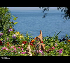 Little Men in the Garden (Don Iannone) Tags: flowers trees ohio summer lake flickr dof lakeerie waterfront depthoffield bluelake sunnyday bratenahl northeastohio cuyahogacounty doniannone lovelyscene summerbook june2009 exclusivecommunity doniannonephotography picturesquescene bratenahlplace flowergardengnomestatues wealthycommunity
