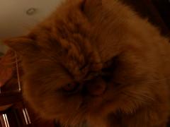 Gato (Beck_monzn_dg1_2009) Tags: animal gato felino mascota