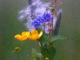 very small (George Ino) Tags: blue summer green grass yellow blauw zomer gras geel boterbloemen