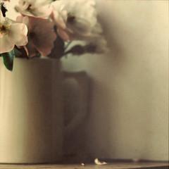 ... (Béatrice Lechtanski) Tags: fivestarsgallery masterpiecesofphotography