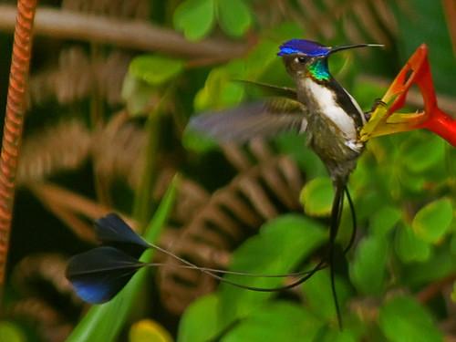 México, Colombia y Perú a la cabeza de sitios con especies en peligro de extinción