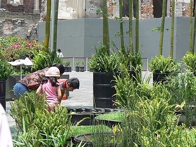 jardin sous tour latinoaméricaine.jpg