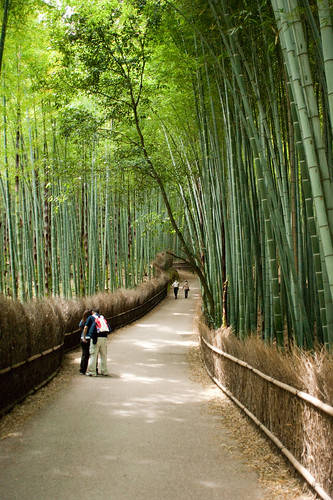 Bamboo groves - Kyoto