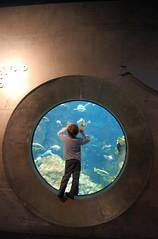 Blured Child (Julian Russi) Tags: sanfrancisco aquarium child blurred getty natgeo
