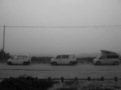 Real fog Surfari
