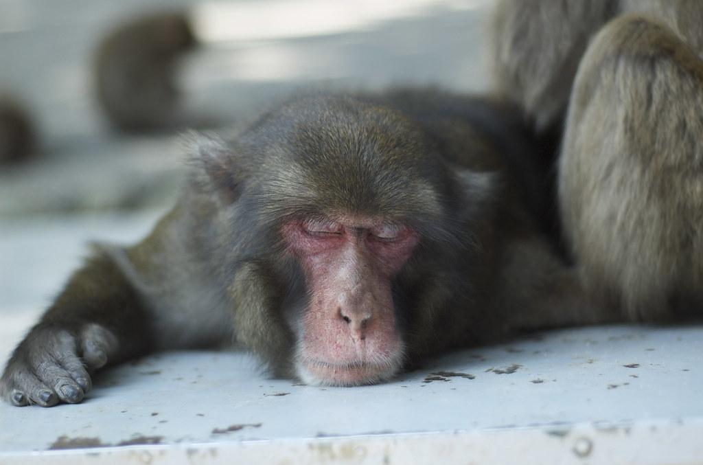 monkey #13