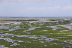 Playa de Greve (Hafo.) Tags: mar playa algas