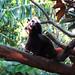 Taronga Zoo_10