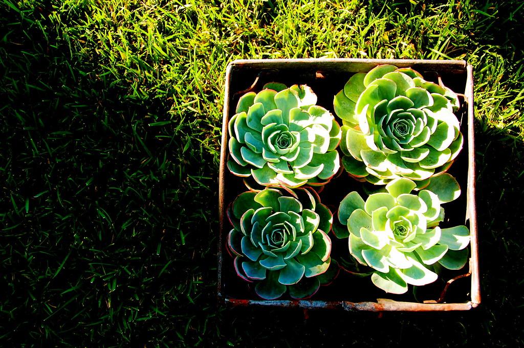 i like this arrangement