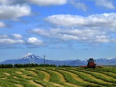 Heyskapur  Landsveit (h) Tags: sky mountain tractor field clouds landscape volcano iceland farm harvest hay agriculture cloudscapes hekla rbr rangrvallassla platinumheartaward landsveit