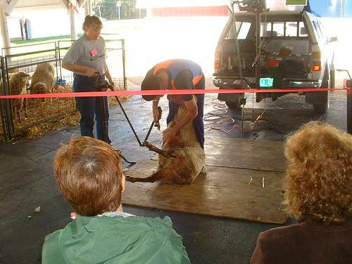 SAFF2009 shearing