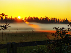 Gold Streaked Mist (picaday) Tags: nature beauty fog fence glow natural streak smooth pasture picaday far hdr saanich morining picadayproductions