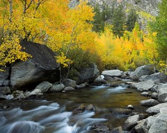 Aspens and Bishop Creek,  September 27, 2009 (Robert Pearce Photography) Tags: california fall water creek landscape golden waterfall sierra september fallfoliage aspen bishop easternsierra nikond200 bishopcreek robertpearce sierrasolstice robertpearce