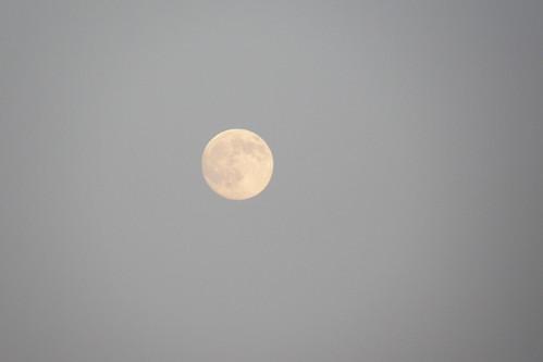 Suzuka中秋的月亮
