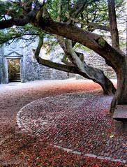 Edinburgh - Craigmillar Castle - The courtyard (pariscub) Tags: red tree tower castle stone architecture scotland ruins edinburgh scottish courtyard historic yew historicscotland hdr towerhouse craigmillar craigmillarcastle
