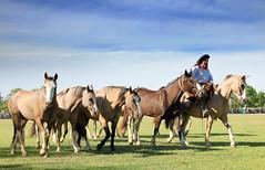 La picaza y los lobunos (Eduardo Amorim) Tags: horses horse southamerica argentina criollo caballo cheval caballos cavalos pferde herd cavalli cavallo cavalo gauchos pferd pampa hest hevonen chevaux gaucho  amricadosul hst gacho  campero amriquedusud provinciadebuenosaires  gachos  sudamrica sanantoniodeareco suramrica amricadelsur  areco sdamerika gregge crioulo troupeau caballoscriollos herde criollos  tropillas  pampaargentina camperos americadelsud tropilhas tropilla  crioulos cavalocrioulo americameridionale tropilha caballocriollo campeiros campeiro eduardoamorim cavaloscrioulos iayayam yamaiay pampaargentino