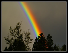 Rainbow Closeup (Carplips) Tags: trees colors rainbow spokane darksky