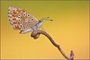 "RUGIADA (Siprico - Silvano) Tags: natura cernuscosulnaviglio naturalistica macrofografia ""macro siprico fotografianaturalistica faunaandfloraoftheworld pricoco silvanopricoco wwwpricocoorg httpwwwpricocoorg wwwfotografiamacrocom fotografialicenidebutterflyfarfallamacrosbuzznbugzcanonsoloreflexmacrofotografiafotografia"