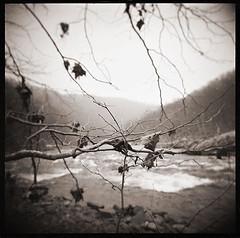 Along the Narrows (DRCPhoto) Tags: 6x6 film holga toycamera westvirginia squareformat ilfordxp2super plasticcamera cheatriver 120gcfn