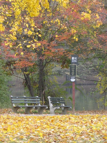 Clove Lake Bench